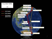 C5 Migration route